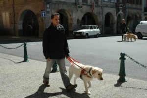 Une personne accompagnée d'un chien-guide