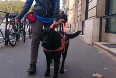 Avoir un chien-guide n'est pas accepté partout